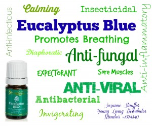 Young Living Eucalyptus Blue